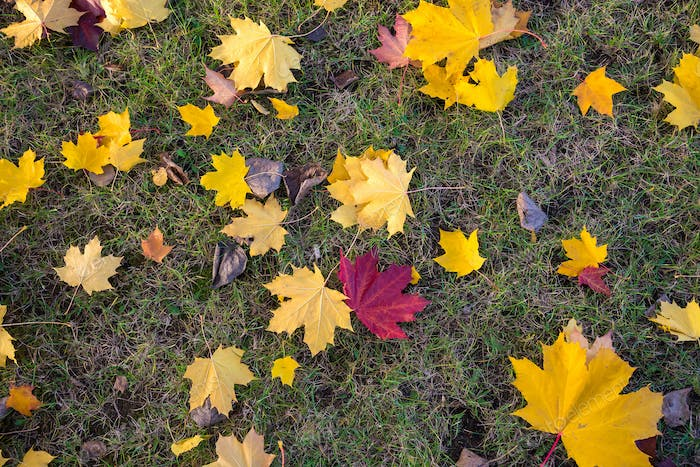 Background made of grass and autumn leaves