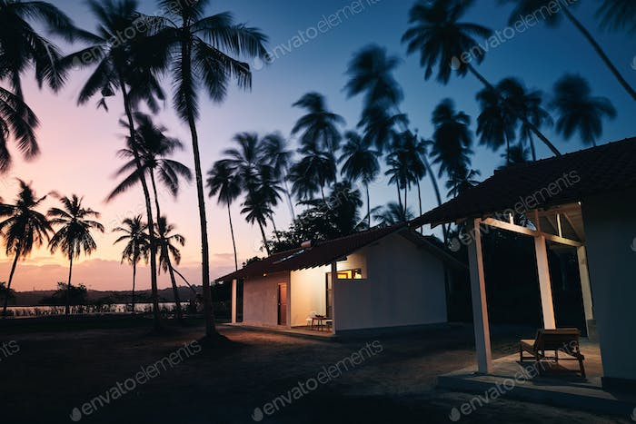 Bungalows under coconut palm trees
