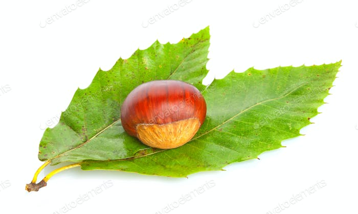Chestnut on green leaves