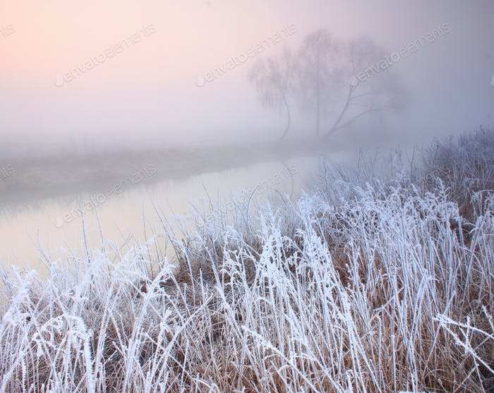 Misty dawn at the forest lake