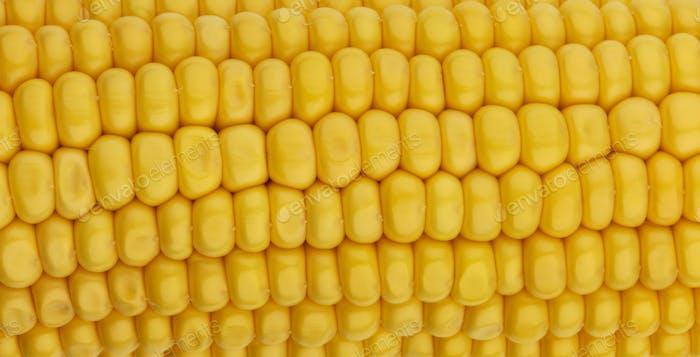 Corn seeds texture, macro, close up of raw yellow corn grains background