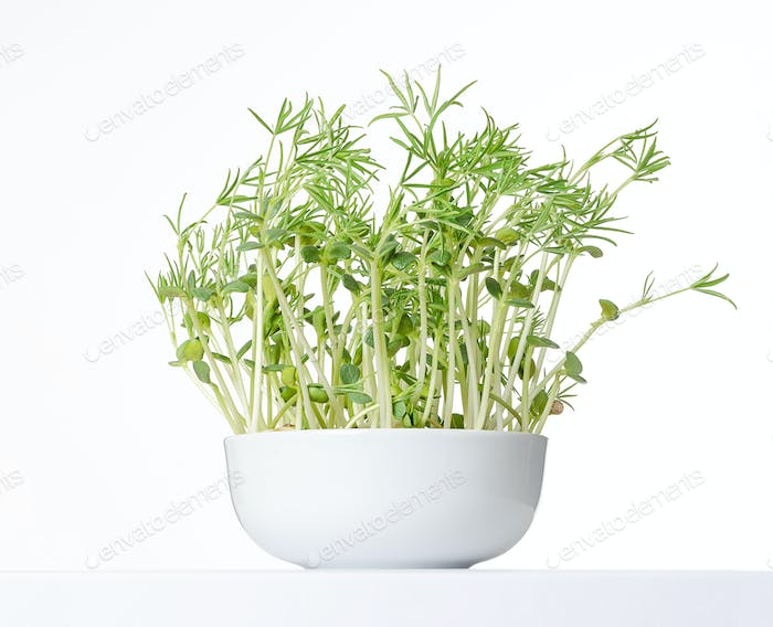 Sweet lupin bean seedlings in white bowl, front view