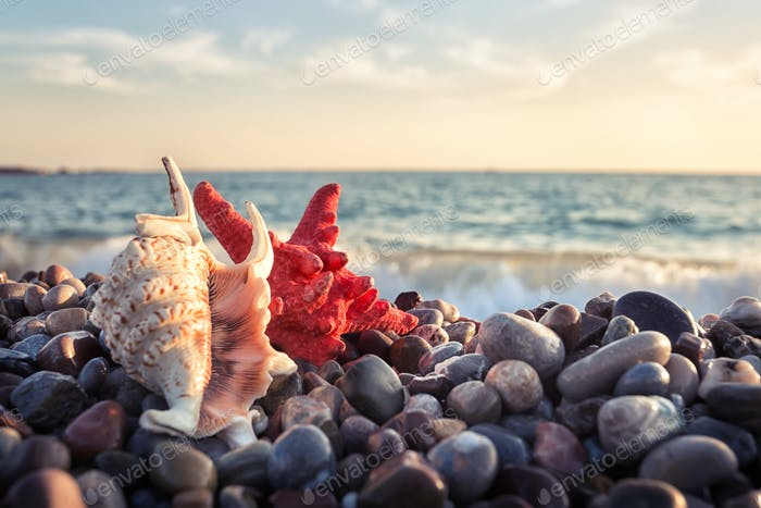Starfish and seashell on pebbles of the sea shore