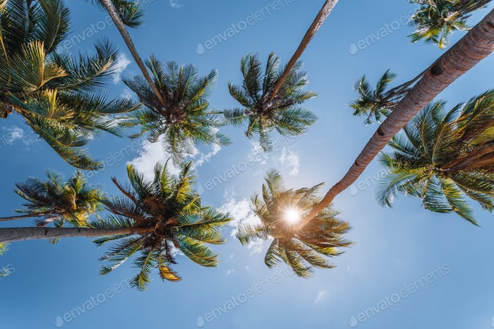 blue sky and top of palm-trees with sunlight, background
