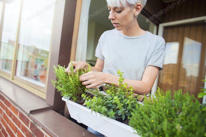 Mujer comprobando hierbas en el balcón
