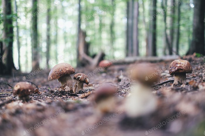 White mushrooms in summer forest