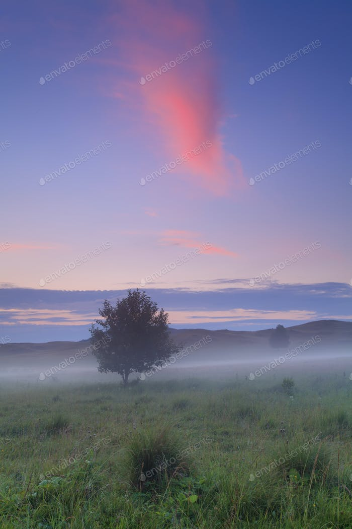 Alone tree on meadow at sunset with sun and mist
