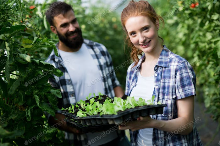Young happy couple farming vegetables in greenhouse
