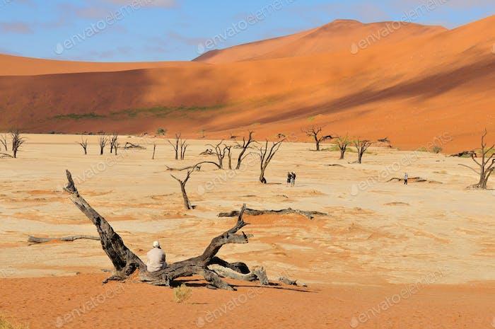 Tree skeletons, Deadvlei, Namibia