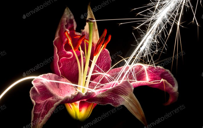 Large Sparks Hitting an Oriental Lily Flower