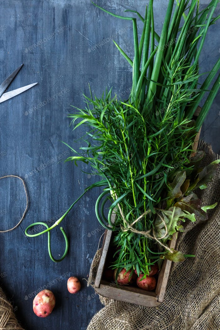 Fresh herbs taragon or estragon, chives and garlic sprouts in a box, rustic style