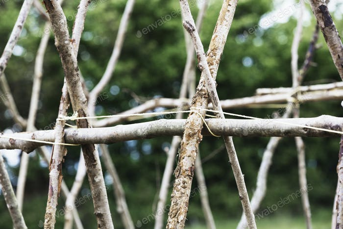 Sticks arranged in a framework for supporting climbing plants.