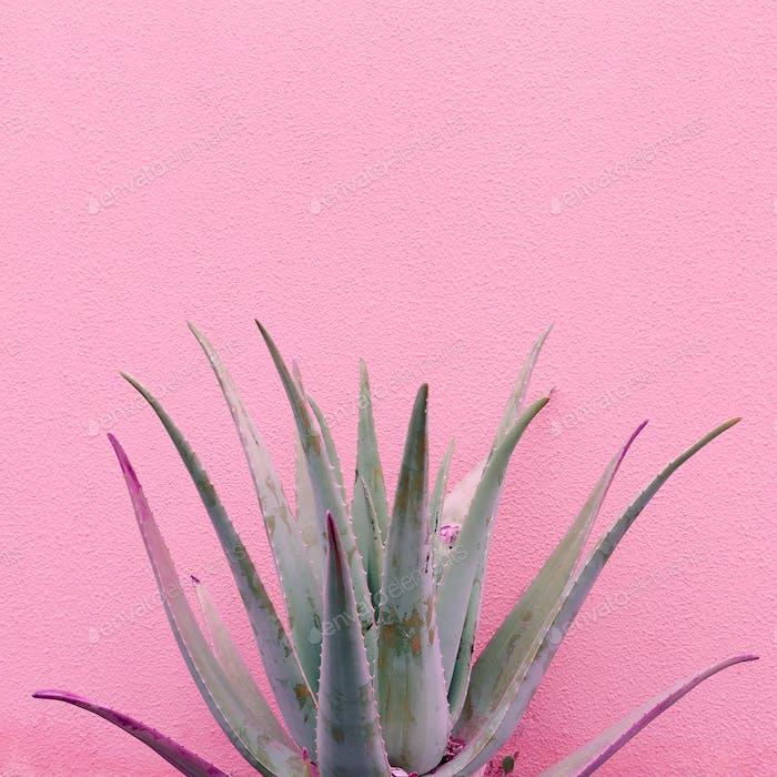 Plants on pink fashion idea. Aloe on pink wall background.  Mini