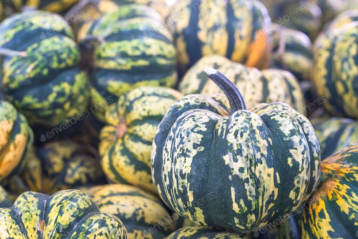 Bunch of green pumpkins for sale-4