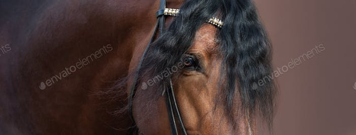 Close up image of eye, head and neck of Andalusian horse.