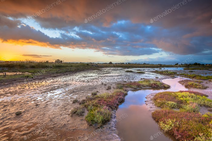 Estuary marshland at sunrise