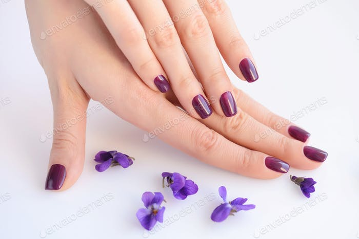 Hands of a woman with dark purple manicure on nails and flowers