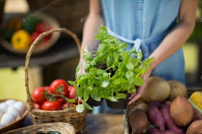 Mid section of woman holding leaf vegetable
