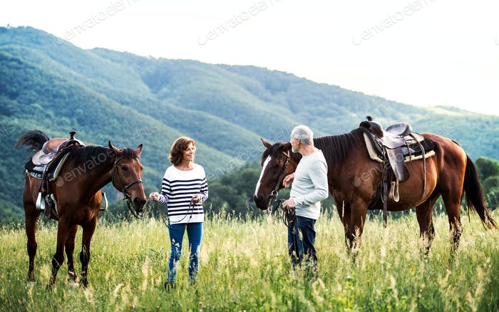 A senior couple holding horses grazing on a pasture.