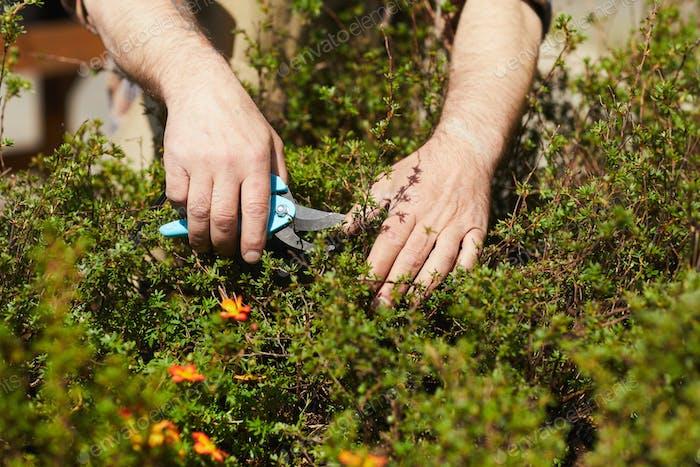 Gärtner Clipping Pflanzen Nahaufnahme