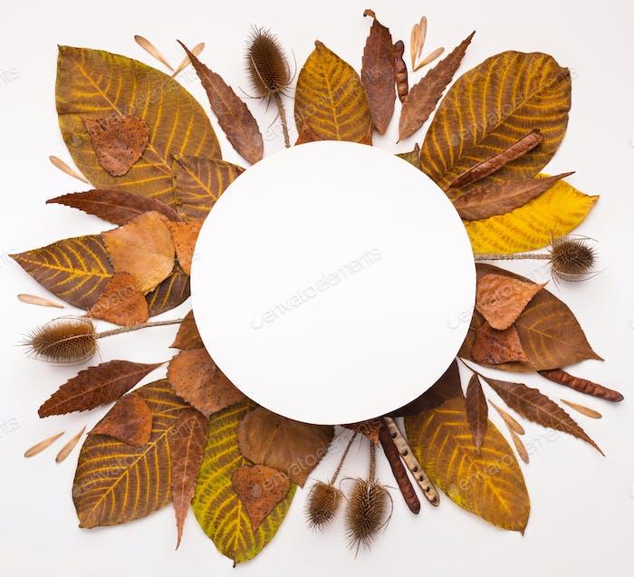 Autumn round frame of fallen leaves on white background