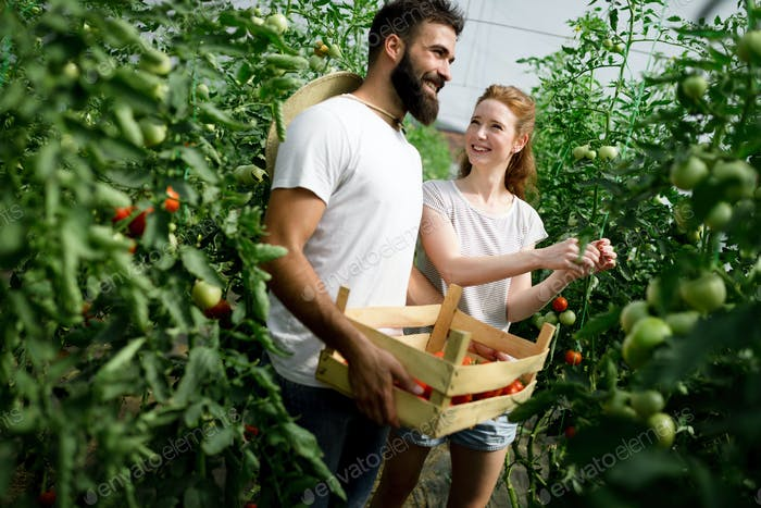 Woman and man in tomato plant at hothouse