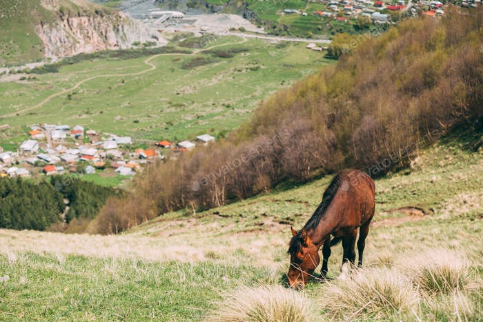 Horse Grazing On Green Mountain Slope In Spring In Mountains