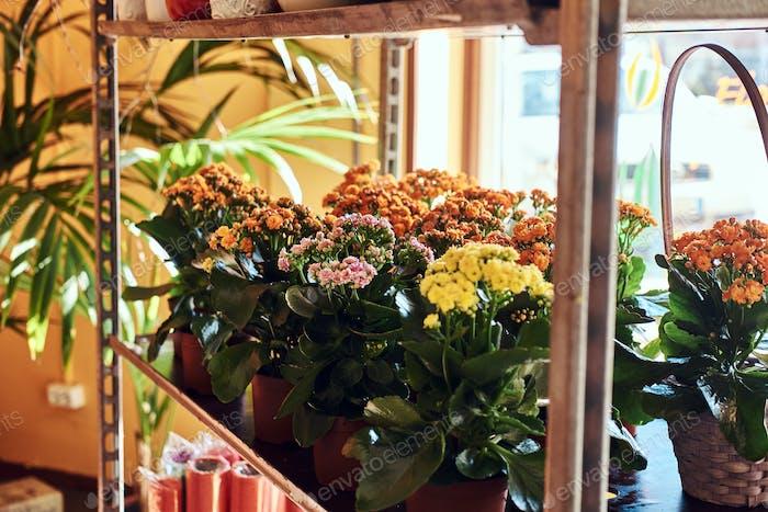Imagen de primer plano de una tienda de flores con una variedad de flores de primavera de colores en macetas.