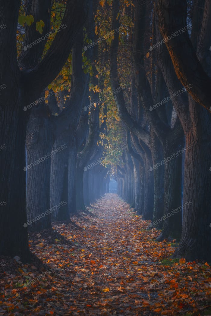 Lucca, autumn foliage in tree lined walkway. Tuscany, Italy.