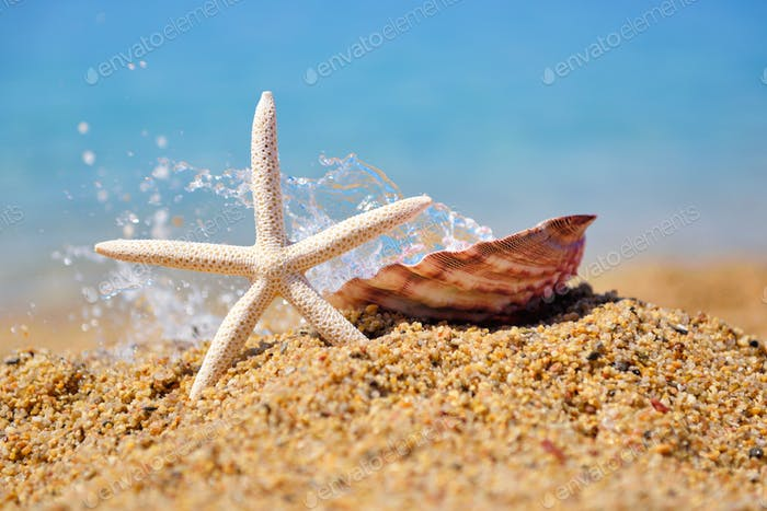 White starfish and a shell on the beach