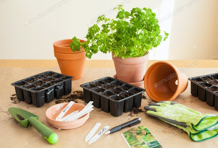 gardening, planting at home. sowing seeds in germination box