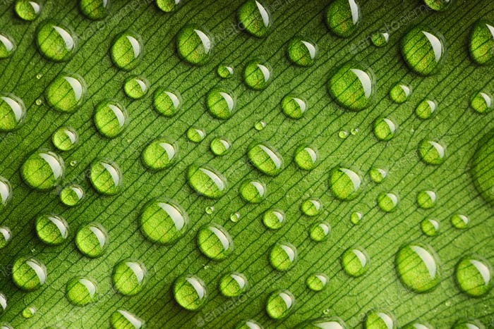 Thumbnail for Water drops on leaf