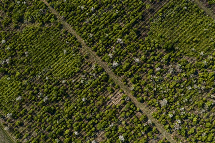 Top view of trees texture