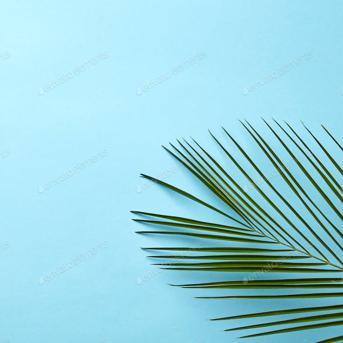 Green palm leaf on a blue background with copy space. Natural layout. Flat lay