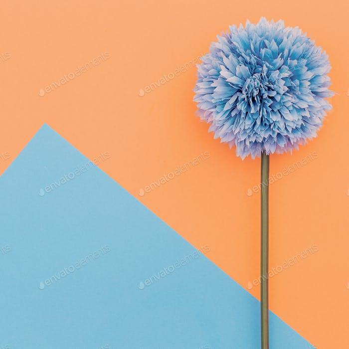Flower on geometry background. Minimal art design