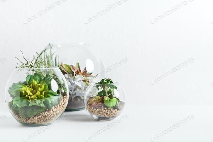 Home indoor green plants concept, copy space
