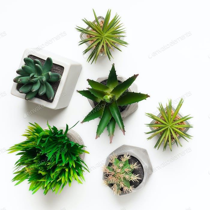 Mini artificial succulent plants in pots isolated on white
