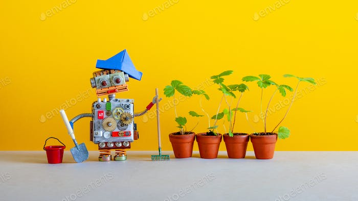 Robot gardener with bucket shovel rake and sprouts of wild strawberries in clay flower pots.