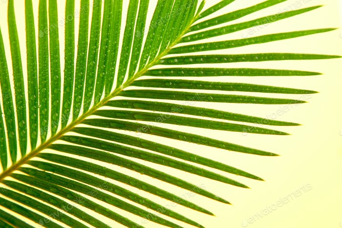 Palm leaf on yellow paper background