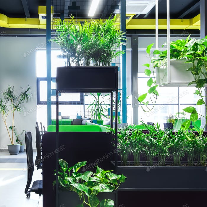 Empty workplaces in modern office with plants