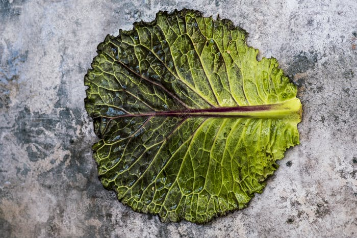 Still life, a single fresh cabbage leaf with red and green colour on a grey background.