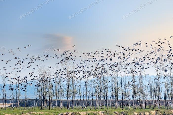 die Vögel kehren bei Sonnenuntergang in den Wald zurück