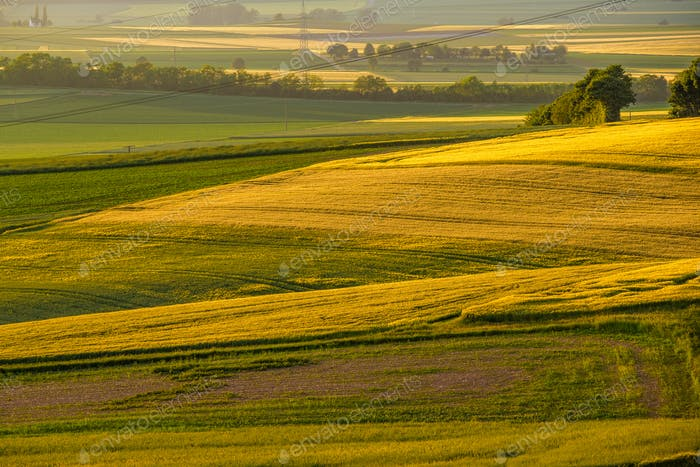 Rolling hills on sunset. Rural landscape. Green fields and farmlands, fresh vibrant colors