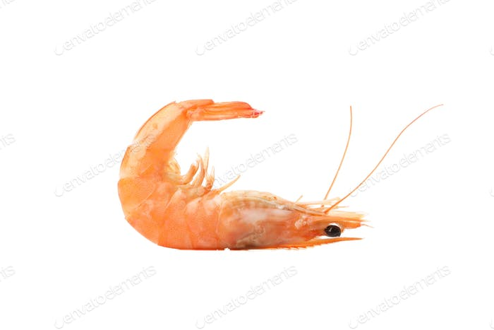 Delicious shrimp isolated on white background. Seafood