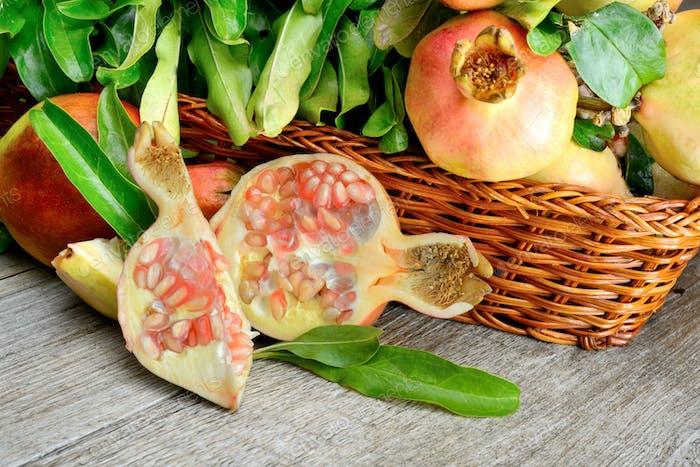 Ast mit kleinen und saftigen Granatäpfeln