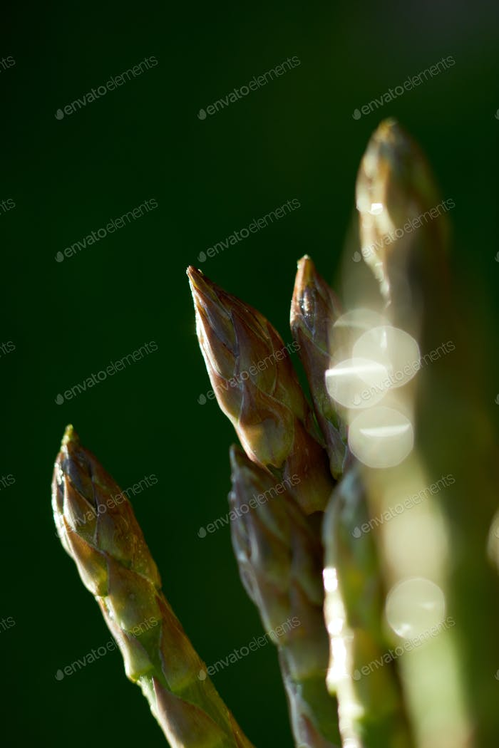 Spears of Fresh green asparagus in the sun, copy space for text