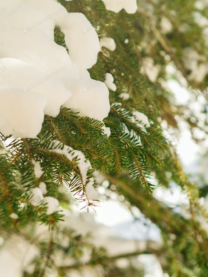 Winter tree branches covered with snow