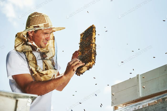 Need to be careful. Beekeeper works with honeycomb full of bees outdoors at sunny day