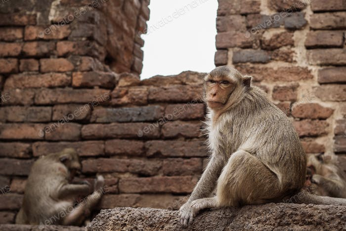 monkey on brick