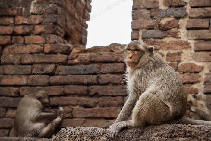 monkey on brick